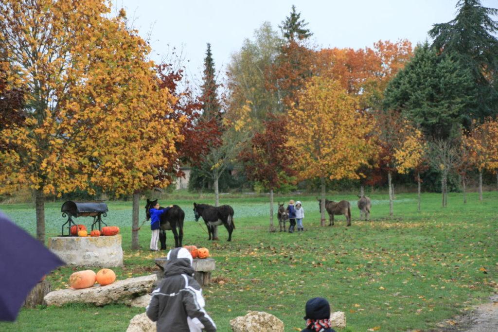 Randonnée âne chien vacances sejour ferme de prunay